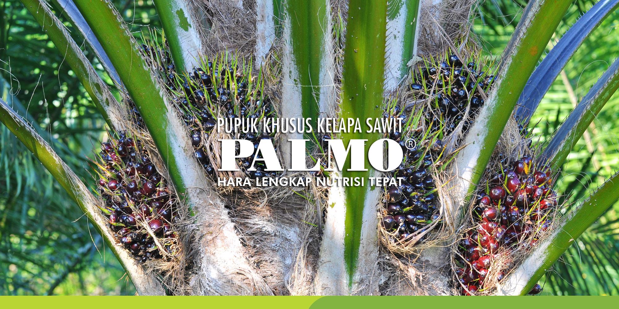 saraswanti product palmo
