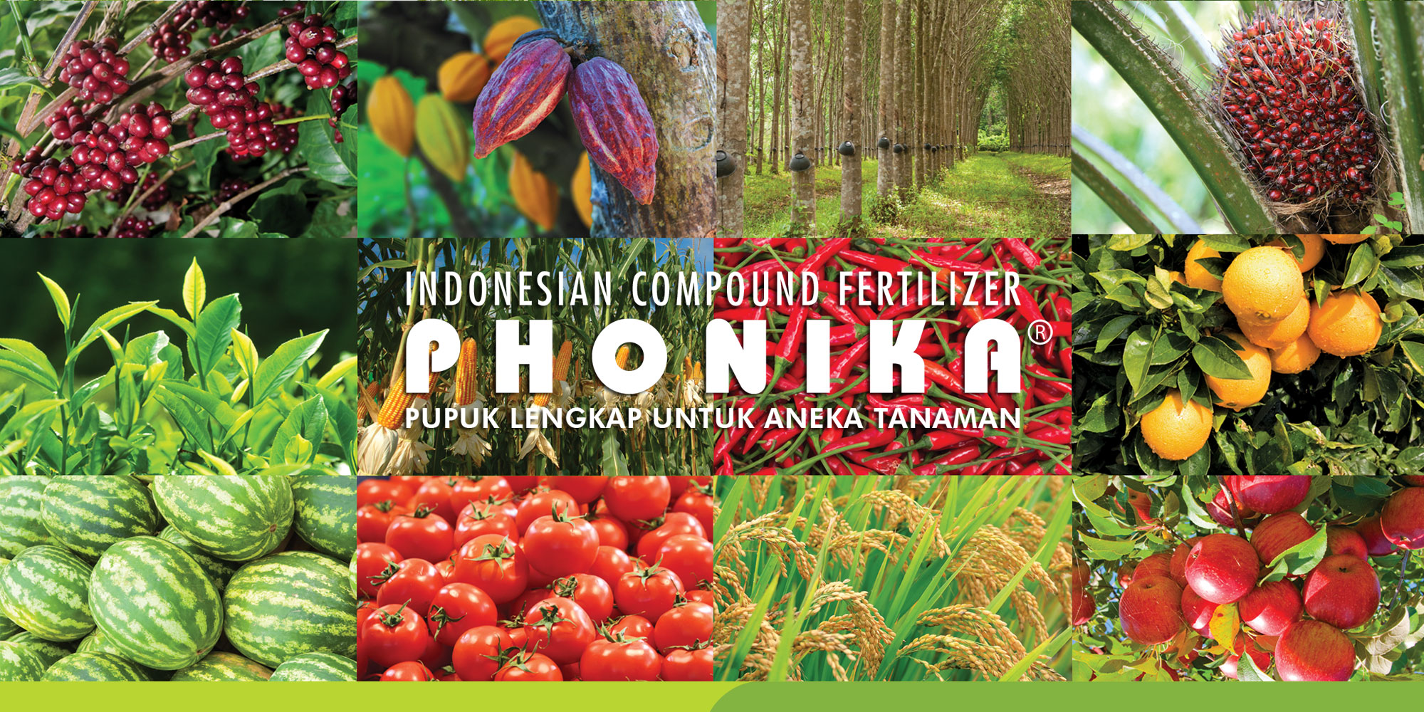 saraswanti product phonika