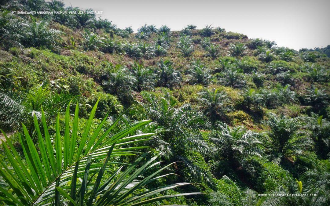 Palmo Tingkatkan Efisiensi Pemupukan di Tanah Marginal