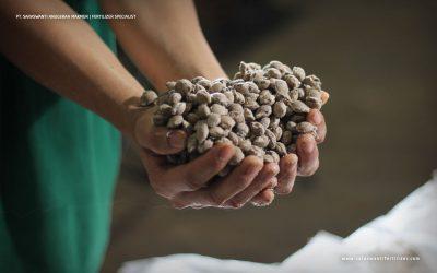 Teknologi Pupuk Majemuk Untuk Tanaman Kelapa Sawit